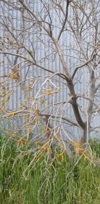 Treestrip