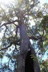 notquiteafigtree