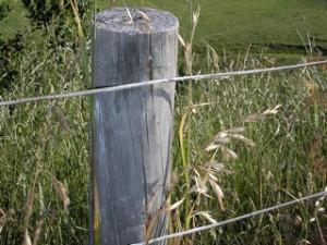 Boundary_Fence