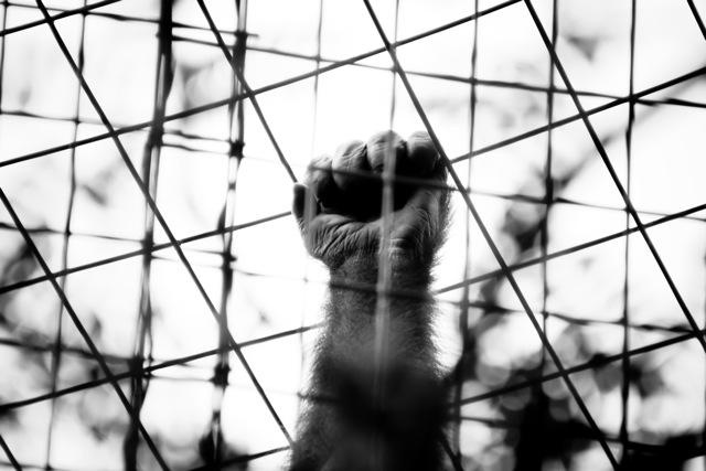 cagedhand