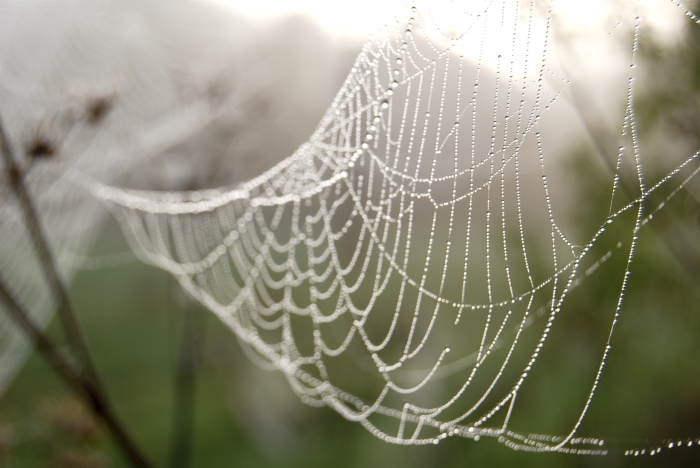 SAW-systematic-web